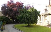 Kendal Museum garden - 18.7.13
